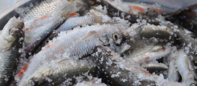 В Кудымкарском районе выберут лучшего рыбака