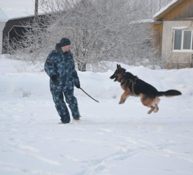 Что умеют служебные собаки Кудымкарского СИЗО
