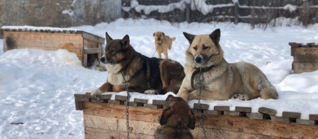 Приюту для собак в Кудымкаре нужна помощь