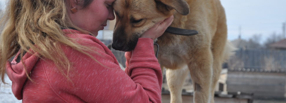 Ольга Епинапродолжит ухаживатьза бездомными собаками в Кудымкаре
