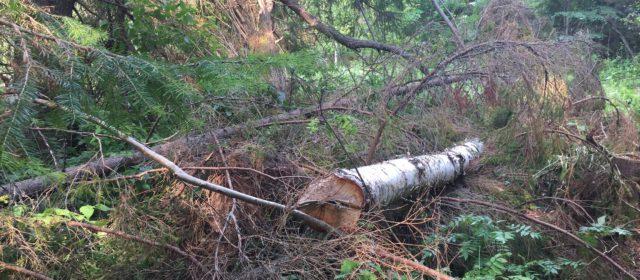 В Юсьвинском районе незаконно вырубали лес. Нарушитель отправится в колонию