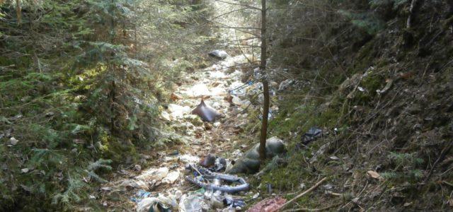 Главу Кудымкарского района прокурор обязал убрать свалки в лесу