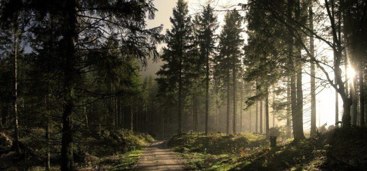 В лесах Кудымкарского района нашли тело убитого мужчины