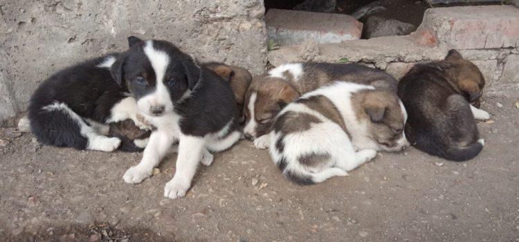 В Кудымкаре началось строительство пункта для бездомных собак