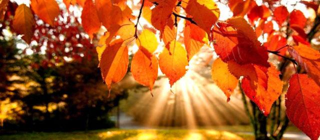 Ого! Сентябрь в Прикамье ожидается сухим и теплым